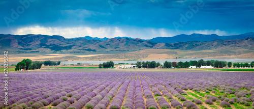 Foto auf Leinwand Lavendel Lavender field panorama in rural Utah, USA.