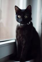 Little Black Cat Indoors