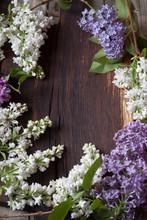 Lilacs On Wood