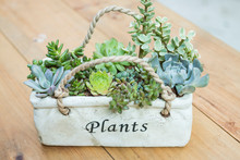 Multifarious Succulents Growing In White Container
