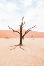 Dry Lonely Tree On The Desert On Iconic Deadvlei, Sossusvlei, Namibia.