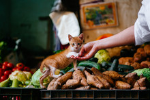 Little Kitten In The Fruit Market Gives A Hand To A Woman