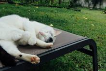 Cat Sleep On Chair Of A Yard