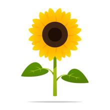 Cartoon Sunflower Vector Isola...