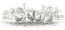Rooster And Hens In Farmland Illustration. Vector.
