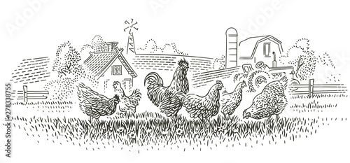 Rooster and hens in farmland illustration. Vector. Wallpaper Mural
