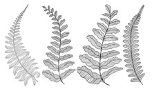 Set Colored  Fern Leaves. Vect...