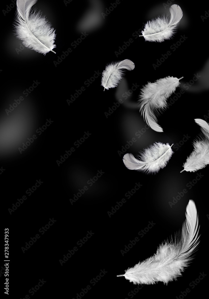 Fototapety, obrazy: solf white feathers falling in the air. black background.