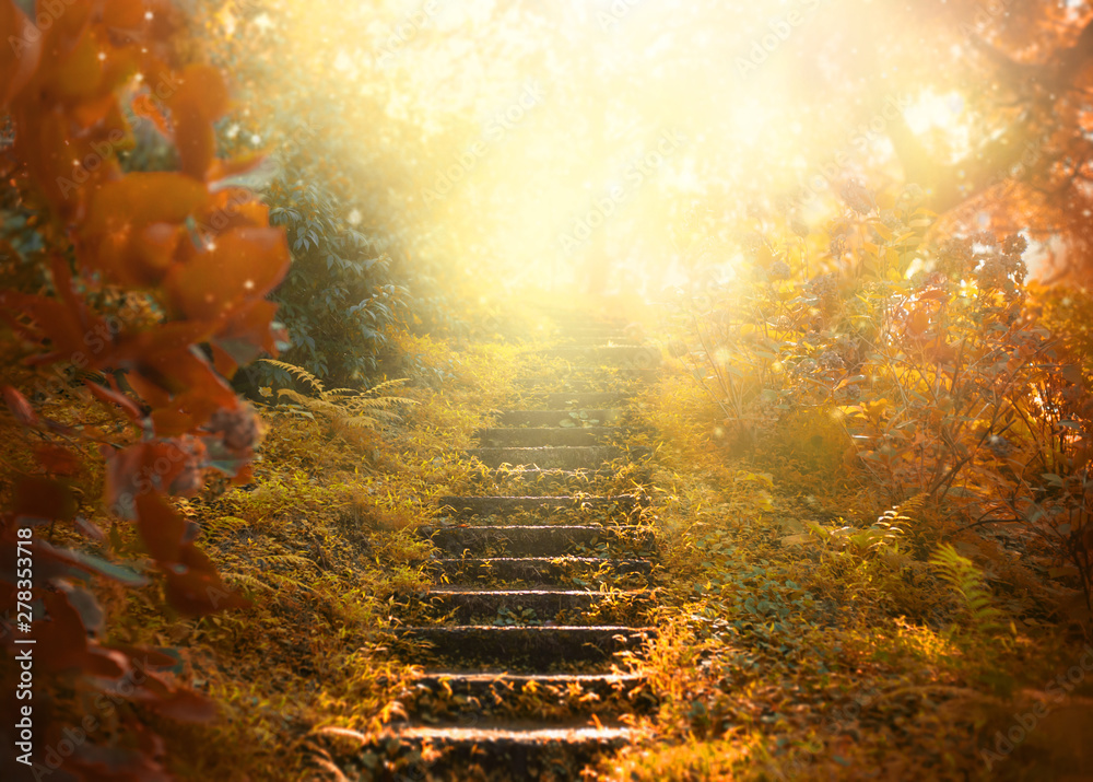 Fototapeta Autumn background, stairs to the sky. amazing mysterious road steps leads to mystical world, fairytale path hides among yellow and orange trees, magical October in foggy forest, beauty of nature