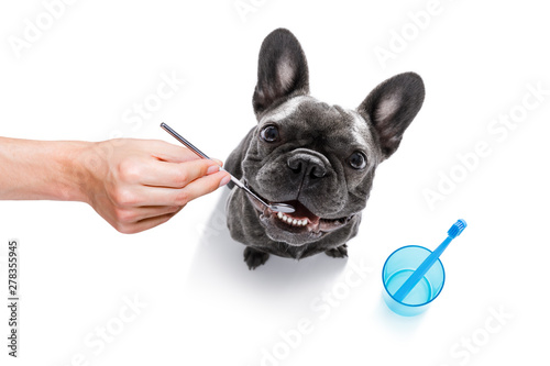 Cadres-photo bureau Chien de Crazy dental toothbrush dog