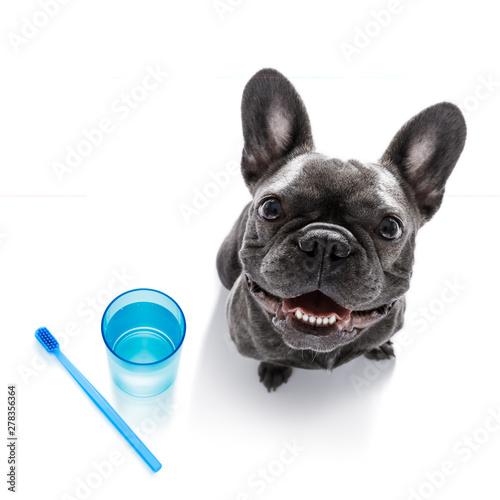 Ingelijste posters Crazy dog dental toothbrush dog
