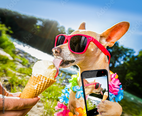 Cadres-photo bureau Chien de Crazy dog summer vacation licking ice cream