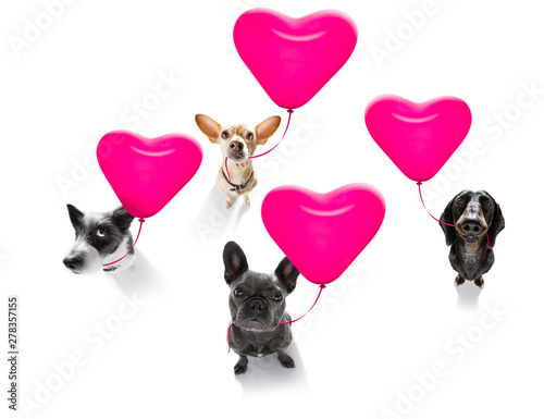Cadres-photo bureau Chien de Crazy happy birthday valeintines dogs