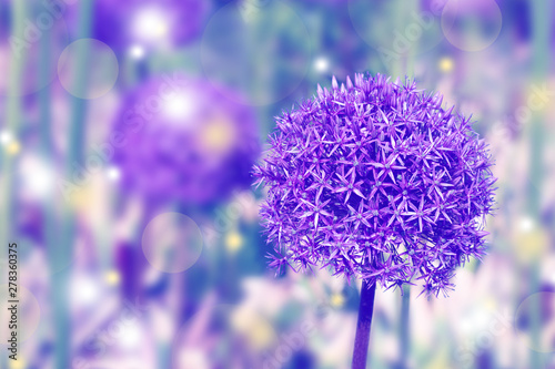 Background made of toned giant allium flower with shining sparkles Canvas Print