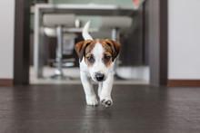 Little White Dog On Brown Floor