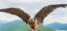 Georgia Eagle On A Background Of Mountains. Selective Focus.