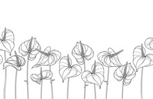 Horizontal Seamless Pattern With Outline Tropical Plant Anthurium Or Anturium Flower In Black On The White Background.
