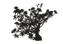 Silhouette Of Realistic Desert Rose Plant, Black Adenium Vector Illustration