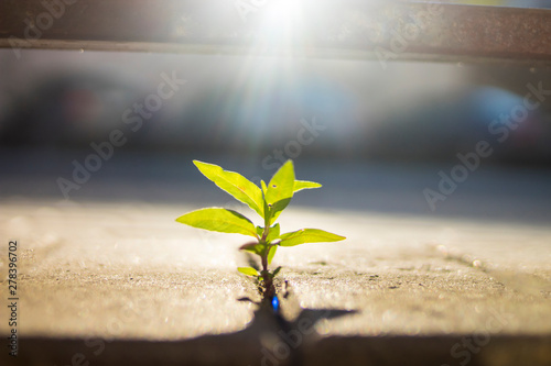 Photo green sprout among concrete grew and stretches to the sun