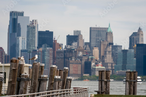 Seagulls at the Old Ferry Dock on Liberty Island near New York City, USA - Image