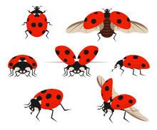 Cartoon Color Lady Bug Icon Set. Vector