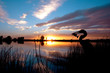 canvas print picture - Silhouette of an egret in front of a beautiful sunset