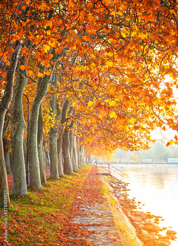 Stickers pour portes Orange eclat Nice autumnal scene at lake Balaton