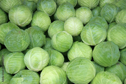 Valokuvatapetti Fresh cabbage from farm field. Vegetarian food concept.