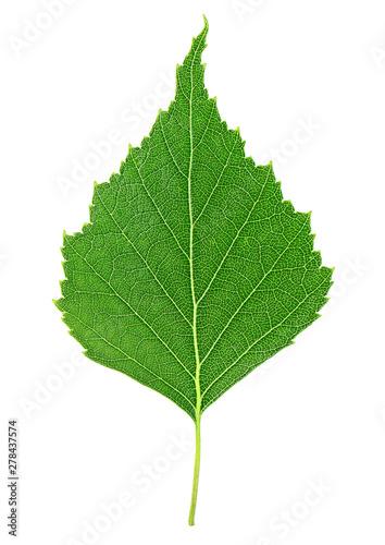 Fototapeta Zielony liść brzozy