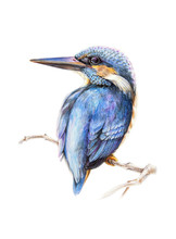 Watercolor Pencil Illustration Of A Kingfisher Bird, Sitting On A Tree Branch. Hand Drawn Picture Of A Bright Blue Bird Isolated On White Background.