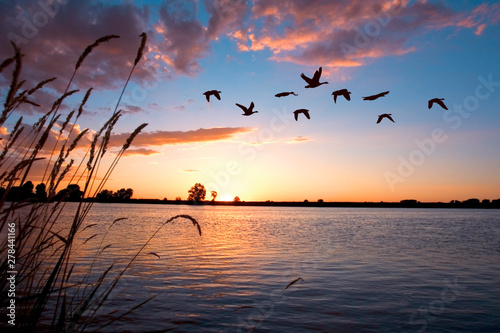 Valokuva Geese flying over a beautiful sunset.