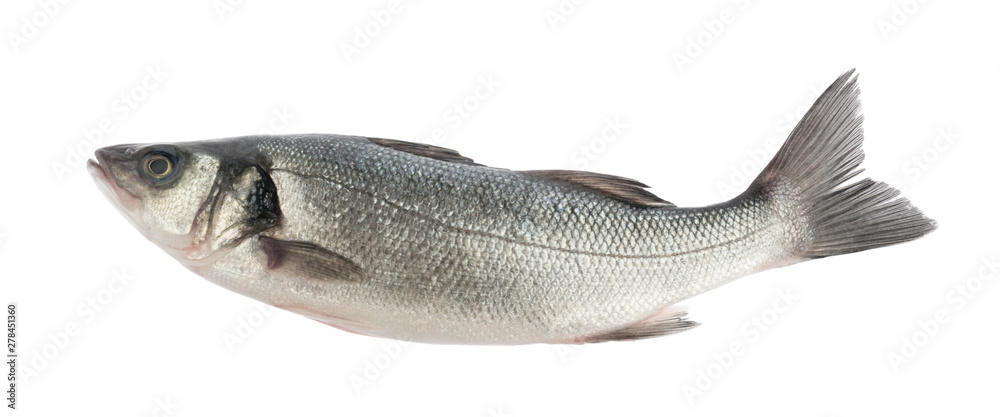 Fototapeta seabass fish isolated without shadow