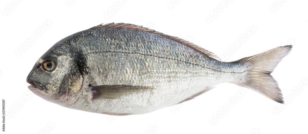 Fototapeta dorado fish isolated without shadow