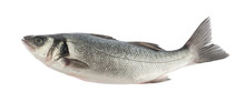 Seabass Fish Isolated Without ...