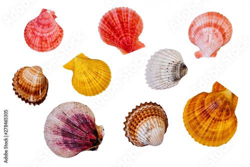 Obraz na plátně  Sea Shells