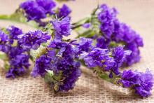 Dark Purple Statice (Limonium Sinuatum) Flowers On Natural Burlap Background. Mediterranean Plant In Plumbaginaceae Family. Purple Bouquet Fillers.