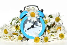 Blue Vintage Alarm Clock Decorated Natural Beautiful Bouquet Of Blooming White Daisy On White Background. Arrows On Dial Show Early Morning Time. Isolated