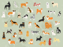 Cute Dogs In Action Wallpaper ...