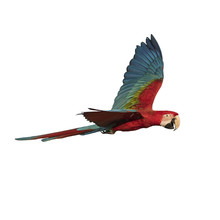 Red And Green Macaw Flying Iso...