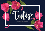 Fototapeta Tulipany - Blooming beautiful pink tulip flowers on blue background template. Vector set of blooming floral for wedding invitations, greeting card, voucher, brochures and banners design.