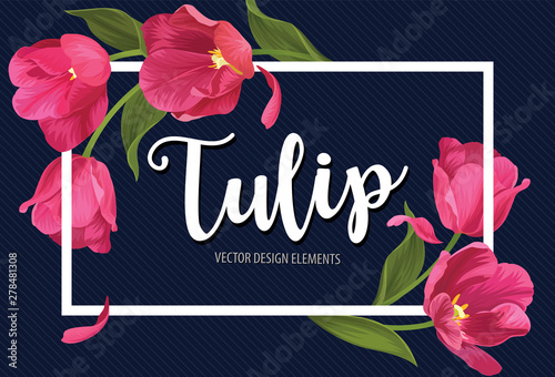 Fototapeta Blooming beautiful pink tulip flowers on blue background template. Vector set of blooming floral for wedding invitations, greeting card, voucher, brochures and banners design. obraz