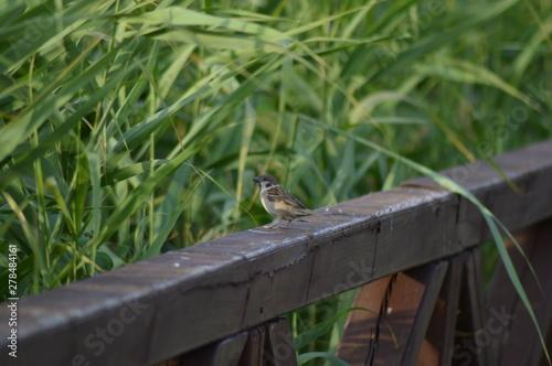 Obraz Wakacje w ogrodzie - fototapety do salonu