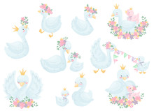 Set Of Image Swans. Vector Ill...