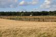 Gerstenfeld vor einer Pferdeweide mit Holzzaun