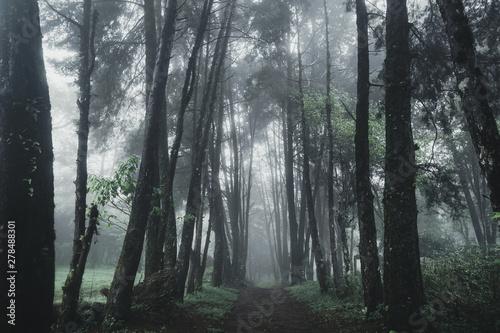 las-deszcz-i-mgla-na-moutain