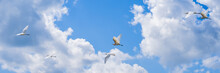 Herons Flying In A Row On Blue Sky Background