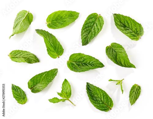 Obraz fresh green mint leaves background - fototapety do salonu