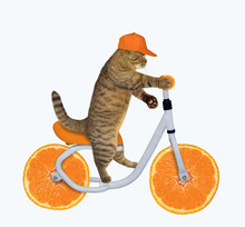 The Cat In A Cap Is Riding The...
