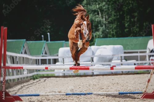 Obraz na płótnie portrait of red trakehner stallion horse jumping