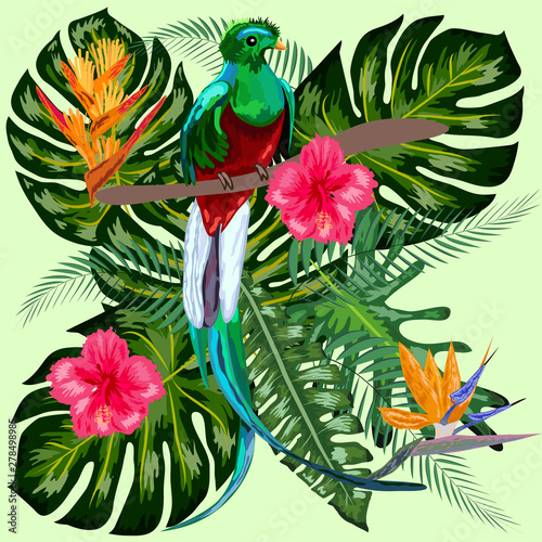 Cuadros en Lienzo Green tropical bird Great resplendent quetzal sitting on a branch against the ba